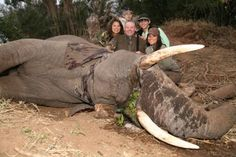 "EXPOSING THE ELEPHANT KILLERS - This disgusting family killed this beautiful creature while it was eating. Picture is from ""Frikkie du Toit Safari"" that allows people to kill endangered animals in Africa. Big Game Hunting, Trophy Hunting, African Elephant, African Safari, African Animals, Stop Animal Cruelty, Animal Welfare, Animal Rights, My Heart Is Breaking"