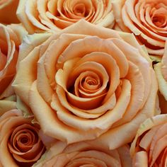 A fresh peach rose, Cinnamon has a large bloom that opens into a classic star-shaped bloom. Its stunning petals are a true peach color. This peach rose would ad Church Wedding Flowers, Rose Wedding Bouquet, White Wedding Flowers, Sage Wedding, Peach Flowers, Peach Rose, Fresh Flowers, Fleur Orange, Artificial Silk Flowers
