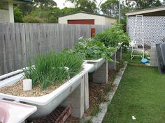 Aquaponics Bathtubs