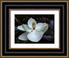 Majesty Framed Print By Russell Latino