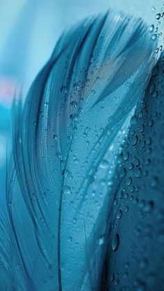 New screen savers wallpapers plain Ideas Wallpaper Azul, Wallpaper Texture, Feather Wallpaper, Abstract Iphone Wallpaper, Fish Wallpaper, Apple Wallpaper, Wallpaper Pictures, Textured Wallpaper, Cool Wallpaper