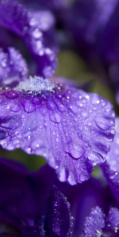 Petal Perfect Purple by ~JasunSweet on deviantART - The beauty of creation! Purple Rain, Purple Love, All Things Purple, Shades Of Purple, Deep Purple, Purple Flowers, Purple Stuff, Color Lila, Malva