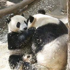 Yun Zi says: You are the best Momma | Flickr - Photo Sharing!