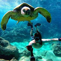 « taking a selfie with his buddy! Destinations, Kauai, Kaanapali Maui, Marines, Places Ive Been, Diving, Turtle, Take That, Ocean