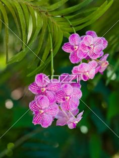 Light Pink Speckled Flowers - Small collections of light pink flowers with white speckles dotting each petal.