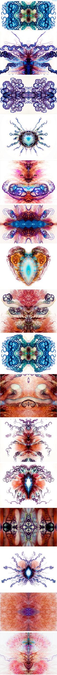 Psychedelic Portuguese Man-of-War Photos by Aaron Ansarov   Wired.com