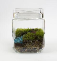 Honey Bunny - Moss Love Terrariums