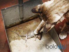 14 Ways To Kill Rats Naturally - Boldsky.com