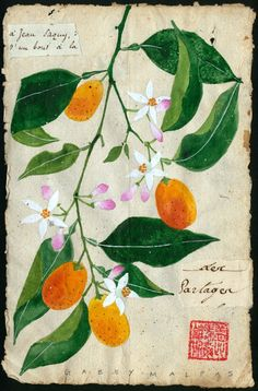 the art room plant: Gabby Malpas Nature Illustration, Botanical Illustration, Illustration Botanique, Garden Of Earthly Delights, Fruits Images, China Art, Fruit Art, Collage, Illustrations