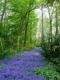 Sa-ti fie viata frumoasa ca o drumetie pe o carare de flori!