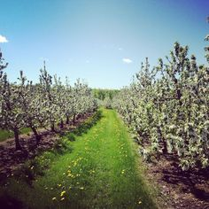 The views at Rockburn Orchards. Rockburn, Quebec