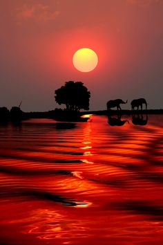 3leapfrogs:aquariusplanet:  wonderous-world:  Sunset with Elephants- Botswana by Michael Sheridan  likes this ♥  .3leapfrogs|•=• •=• •=•Over 40,000 followers