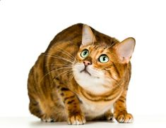 Stress in cats can result in medical and behavior problems. Learn the causes, symptoms, treatment, and prevention of stress in cats. Dog Ramp, Bengal Kitten, Cat Behavior, Outdoor Dog, Cat Health, Cat Breeds, Pet Care, Fur Babies, Reduce Stress