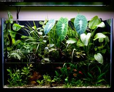 plants to cover up riparium planters Aquarium Aquascape, Planted Aquarium, Aquarium Garden, Aquarium Terrarium, Aquascaping, Aquarium Landscape, Aquarium Fish Tank, Nano Aquarium, Indoor Water Garden