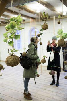 Planteplaneter er sukkulenter med røttene festet i en liten klode av næringsrik jord. De henges opp i en lærsnor, og festes i taket eller på veggen.