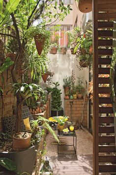 Small Courtyard Gardens, Small Courtyards, Small Gardens, Backyard Garden Design, Balcony Design, Backyard Landscaping, Indian Garden, Porches, Bungalow Exterior