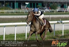 Rhett Butler, son of Rags to Riches, winning the G3 Grad Beograd (Serbia) in October