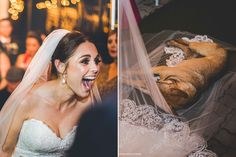 Stray Dog Crashes A Wedding And Finds His Own Happily Ever After | HuffPost