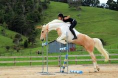 z- Horse Jumping- No Reins, Saddle, I (Alycia Burton)