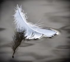 Swan Feather, Hyde Park, Morning Light by Renate on 500px