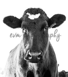 *******DIGITAL INSTANT DOWNLOAD*******  This is an original photograph of a Dairy Cow, taken by EVM Photography.  This file is available for