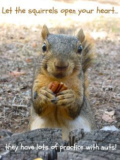 Let the squirrels open your heart.they have a lot of practice wit nuts.Squirrels of wisdom Animals And Pets, Baby Animals, Funny Animals, Cute Animals, Wild Animals, Cute Squirrel, Baby Squirrel, Hamsters, Rodents