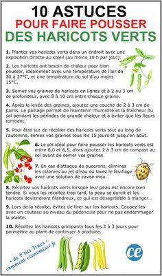 10 market gardening tips for growing beautiful green beans