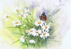 Red Admiral butterfly and daisies - watercolour by Julie Horner