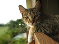 My cat by Cesar Moreno  https://flic.kr/p/5mxHNZ