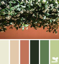 Jasmine Hues - http://design-seeds.com/home/entry/jasmine-hues