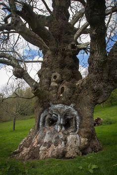 The Owl Tree at Stourhead by Erik van den Ham