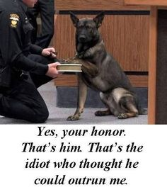Writing Prompt: Write a story from the perspective of a Police dog.