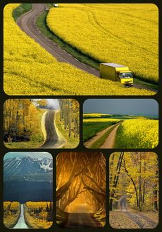 Yellow roads