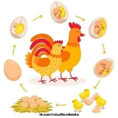 Toddler Learning Activities, Montessori Activities, Vida Animal, Hatching Chickens, Chicken Life, Montessori Materials, Baby Chicks, Forest Animals, Life Cycles