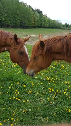 Ginger & Nelly 🤍 Trail Riding, Horse Riding, Lakeside Cabin, Riding Lessons, Winter Cabin, Lake Cabins, Ranch Life, Family Day, Horseback Riding
