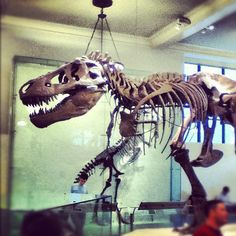 Went to the museum of natural history after class yesterday. Sometimes I wish I could have been a paleontologist I'm obsessed with fossils and ancient history.
