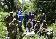 Gorilla Doctors has conducted their fourth snare intervention in 2014 in the 3 countries where they work. Even with the challenge of a charging silverback, the Gorilla Doctors intervention was a success with the help of the dedicated Kahuzi Biega park rangers.