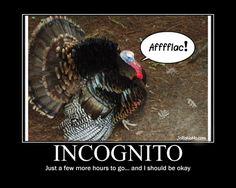 thanksgiving quotes funny | Funny Thanksgiving Pictures (16 Pics)Vitamin-Ha | Vitamin-Ha