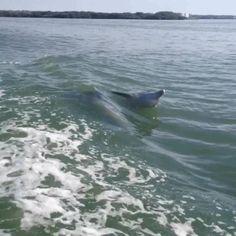 Love Dolphin 's - Teddy Hirt - Google+