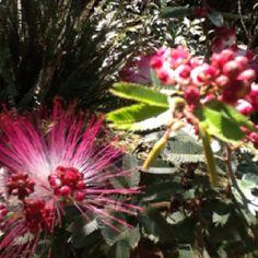 A primavera se aproxima e as flores dão nova vida meu jardim.