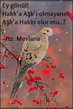 Ey Gönül... Deli Divane Gönül... Black Aesthetic Wallpaper, Aesthetic Wallpapers, Galaxy Wallpaper, Quran, Quotations, Pikachu, Islam, Thats Not My, Inspirational Quotes