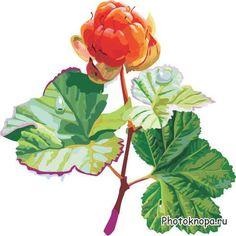 морошка рисованная Marmalade, Creative Art, Marc Jacobs, Cool Art, Plant Leaves, Beading, Creativity, Artsy, Fancy