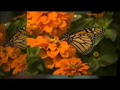 Abraham Hicks - Staying Optimistic at work - YouTube