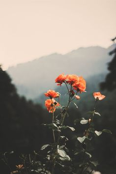 Pin by Itzel Sanchez on Aesthetic backgrounds in 2020 (With images) Aesthetic Pastel Wallpaper, Aesthetic Backgrounds, Aesthetic Wallpapers, Desktop Backgrounds, Nature Aesthetic, Flower Aesthetic, Aesthetic Quote, Summer Aesthetic, Iphone Background Wallpaper