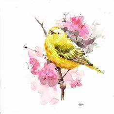 Yellow Warbler  Original Watercolor Bird Painting by CMwatercolors