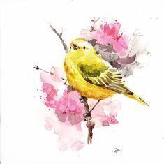 Yellow Warbler  Original Watercolor Bird Painting by CMwatercolors