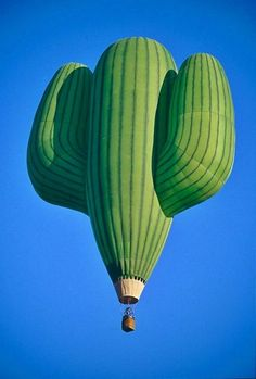 Globo-cactus ^.^