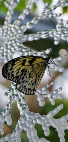 Butterfly Snowflake: Cambridge Butterfly Conservatory, Ontario, Canada   #source: mill24-ph#photographers on tumblr#original photography