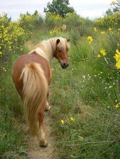 poneys gen__s 096.jpg