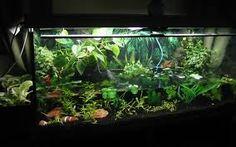 akvaariot - Google-haku